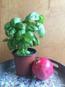 Basil plant + pomegranate fruit